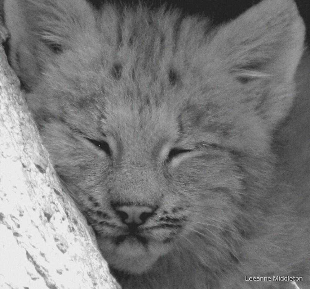 lynx cub by Leeanne Middleton