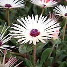 Pretty white flower #1 by Chanzz