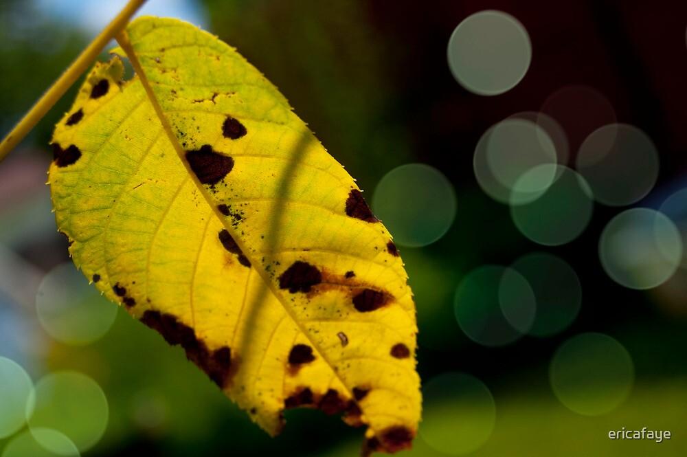 Leaf Light by ericafaye