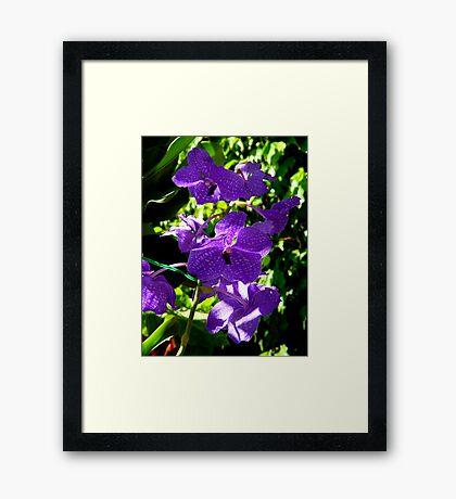 My Purple Beauty Framed Print