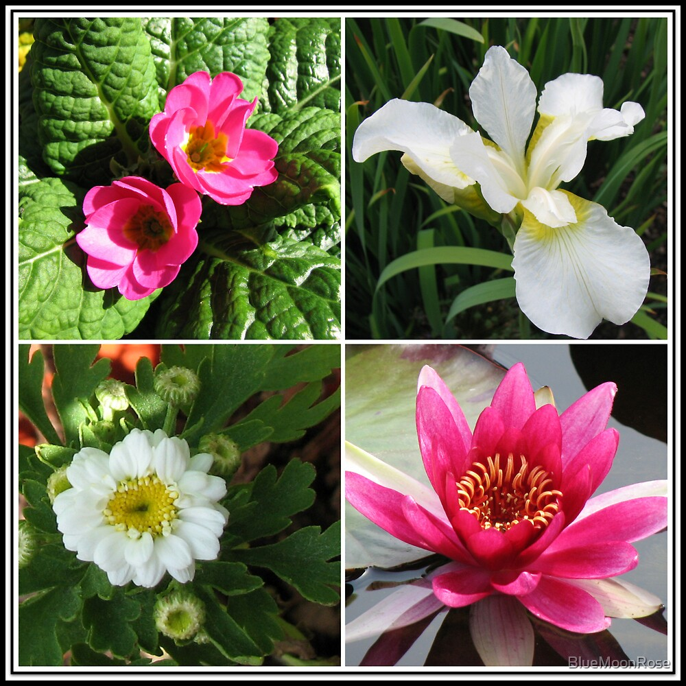 Flower Collage Featuring Deep Pink and White Flowers von BlueMoonRose