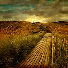 the way by hannes cmarits