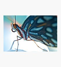 Floridian Butterfly Photographic Print