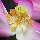 Lotus Detail by Dave Lloyd