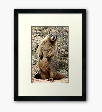Is That You, Betsy?  Framed Print