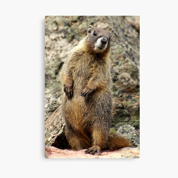 Is That You, Betsy?  Canvas Print