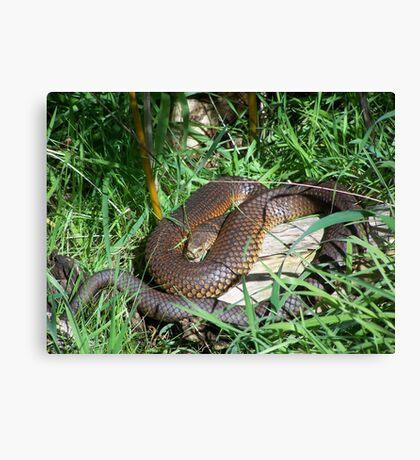 Copperhead Snake Canvas Print