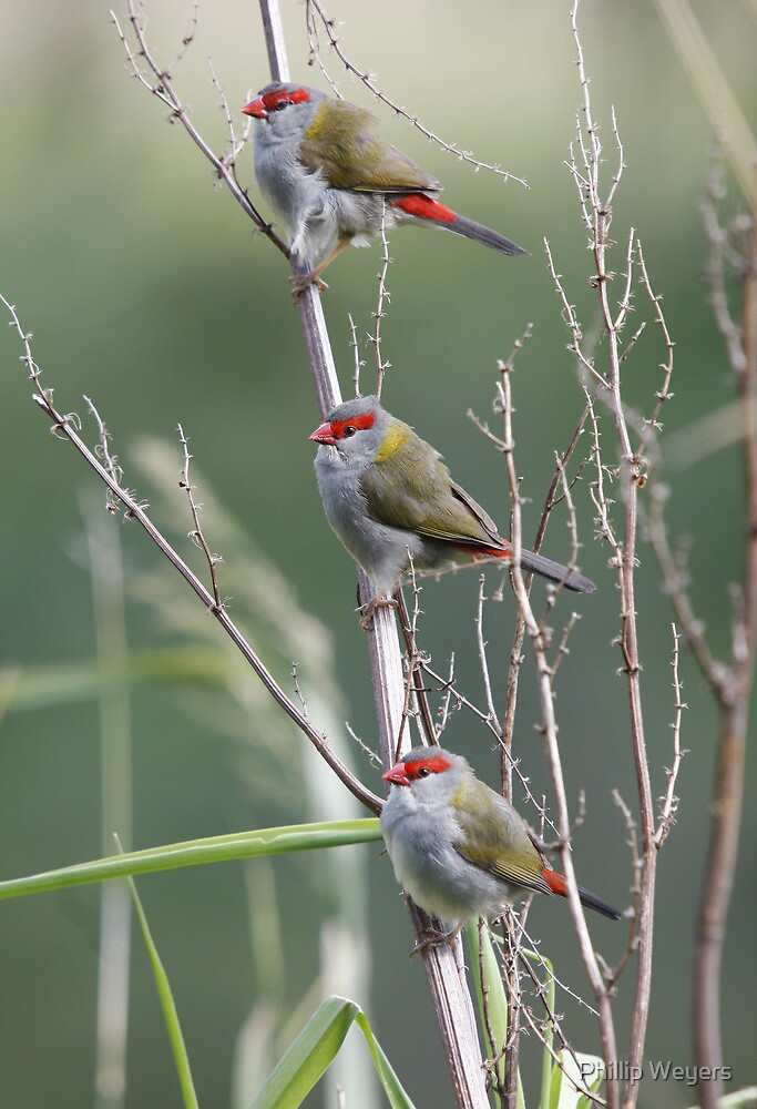 Three Amigos by Phillip Weyers