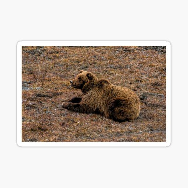 Grizzly Bear II Sticker