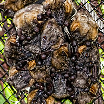 Straw-Colored Fruit Bats by MKWhite