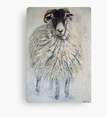 Swaledale Ewe Canvas Print