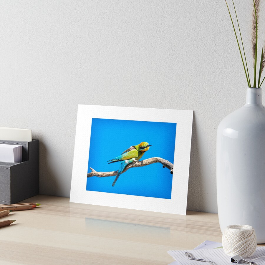 Rainbow Bee Eater Art Board Print