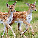 The deer parade by Alan Mattison