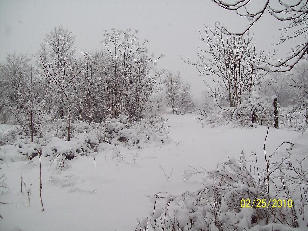 Snow Scene by rockinmom5509