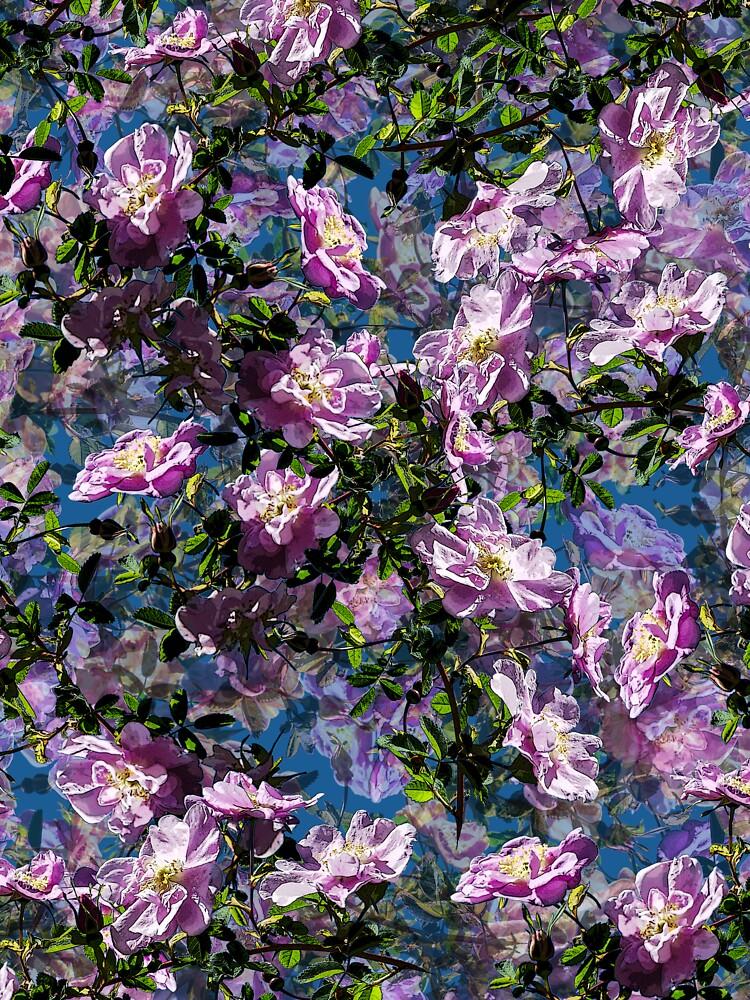 WILD ROSE COLLAGE by JeffBossler