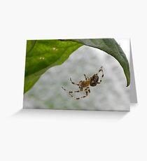 Spider under a leaf Greeting Card