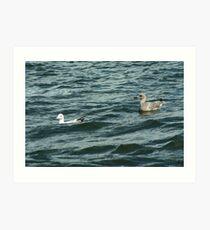 Adult European Herring Gull and juvenile Art Print
