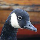 beautiful goose! by monkeyferret