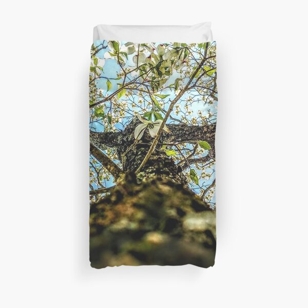 looking up a blooming dogwood tree Duvet Cover