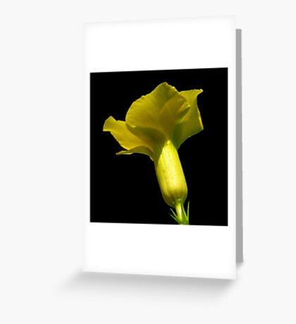All Yellow Greeting Card