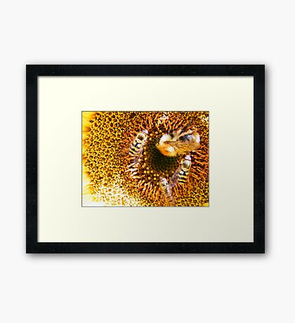 The Sunflower Framed Print