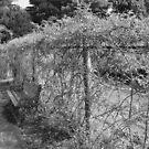 Lonely Bench - Elizabeth Park by Allison  Flores