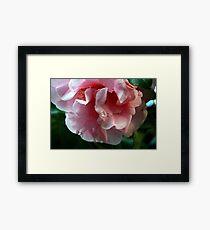 Crying Camellia Framed Print