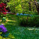 Take Time to Enjoy the Beauty by Monica M. Scanlan