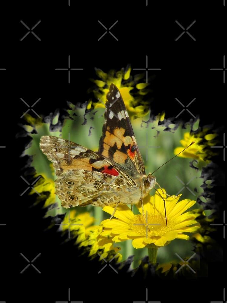 wundervoller Schmetterling auf einer gelben Blume von rhnaturestyles