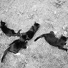 Kittens  by DearMsWildOne