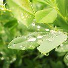 Rain Drops by Allison  Flores