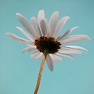 Daisy by Mitch  McFarlane