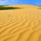 The Great Sandhills by Ellinor Advincula