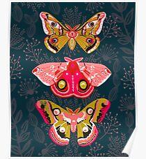 Lepidoptera Nr. 4 von Andrea Lauren Poster