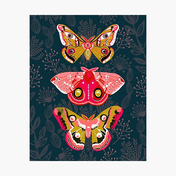 Lepidoptery No. 4 by Andrea Lauren Photographic Print