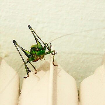 grasshopper by xxnatbxx