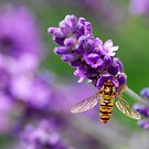 Sweet nectar by Heather Thorsen