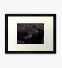 Sweet Feline Dreams... Framed Print
