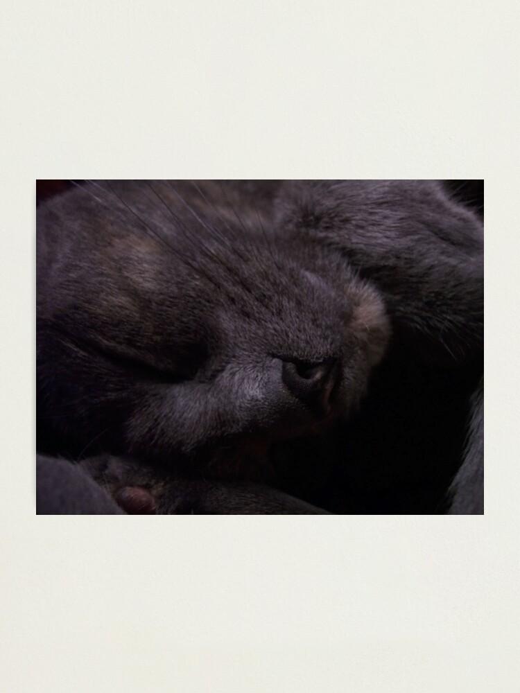 Alternate view of Sweet Feline Dreams... Photographic Print