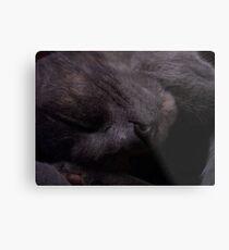 Sweet Feline Dreams... Metal Print