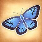 Alcon Blue Butterfly by Tami Wicinas