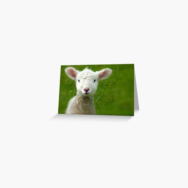 Mmm Whats that Mum!!! - Lamb - NZ - Southland Greeting Card