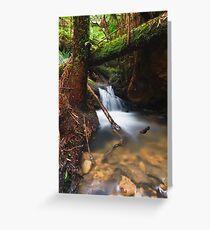 Rainforest Creek Greeting Card