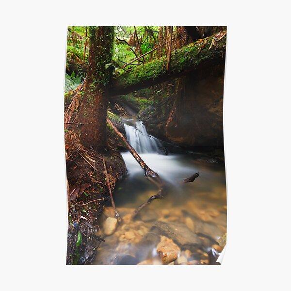 Rainforest Creek Poster