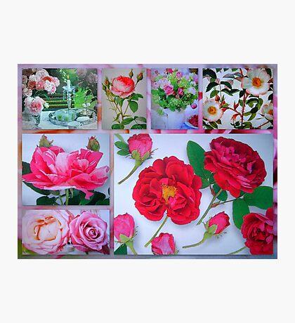 Rose Valentine's Greetings Photographic Print