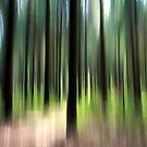 Forest by Ulf Buschmann