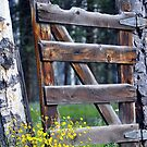 Through a Garden Gate by Jody Johnson