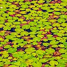 Lily Pads by Dave Hare