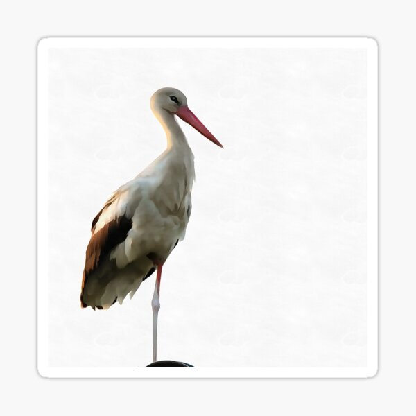 White Stork (Ciconia ciconia) Sticker