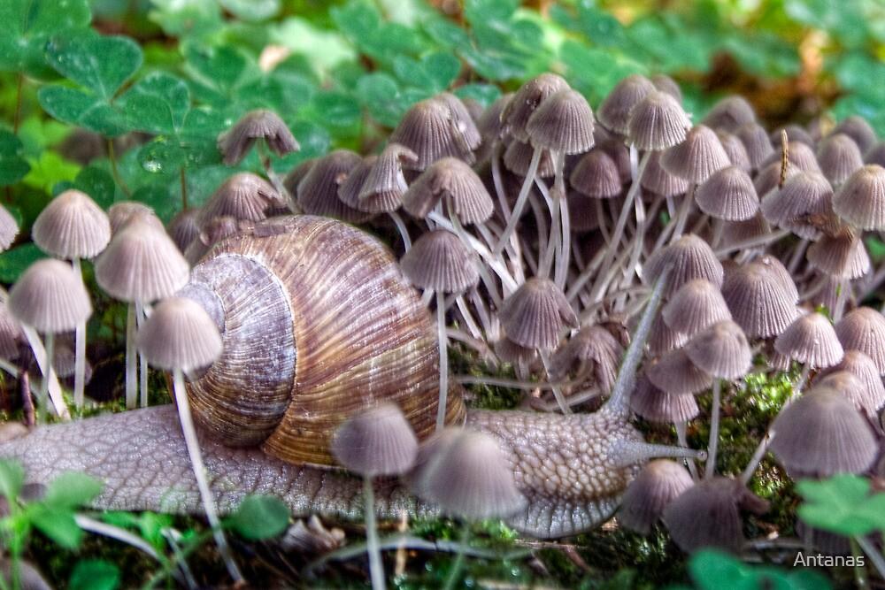Snail and mushrooms by Antanas